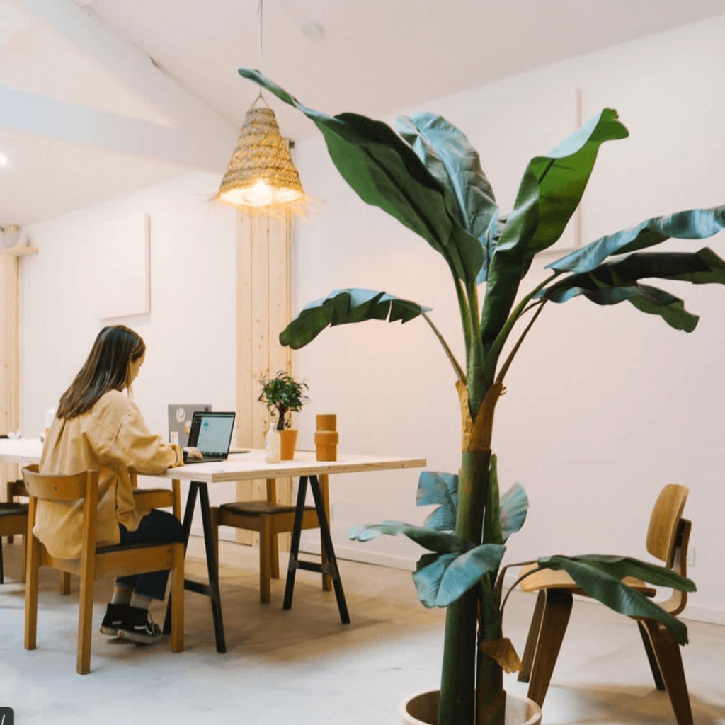 local_coworking_st_jean
